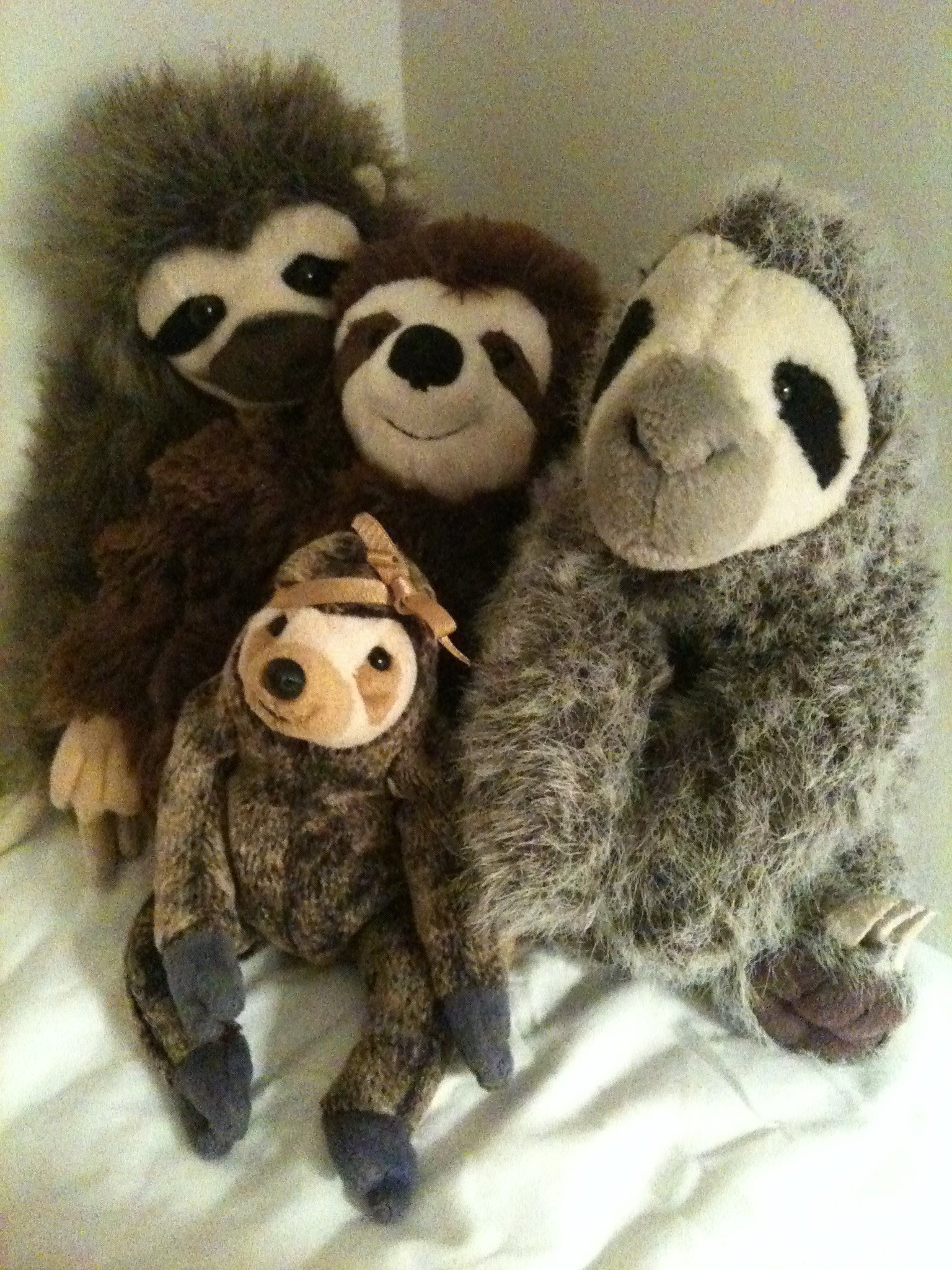 foursloths
