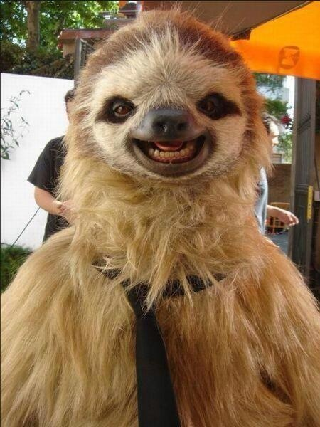 photogenic sloth