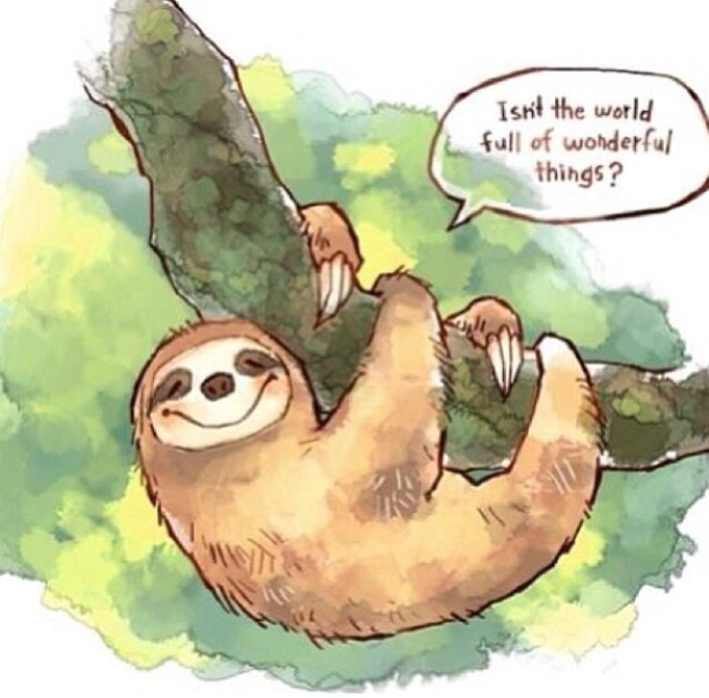 Image result for international sloth day images