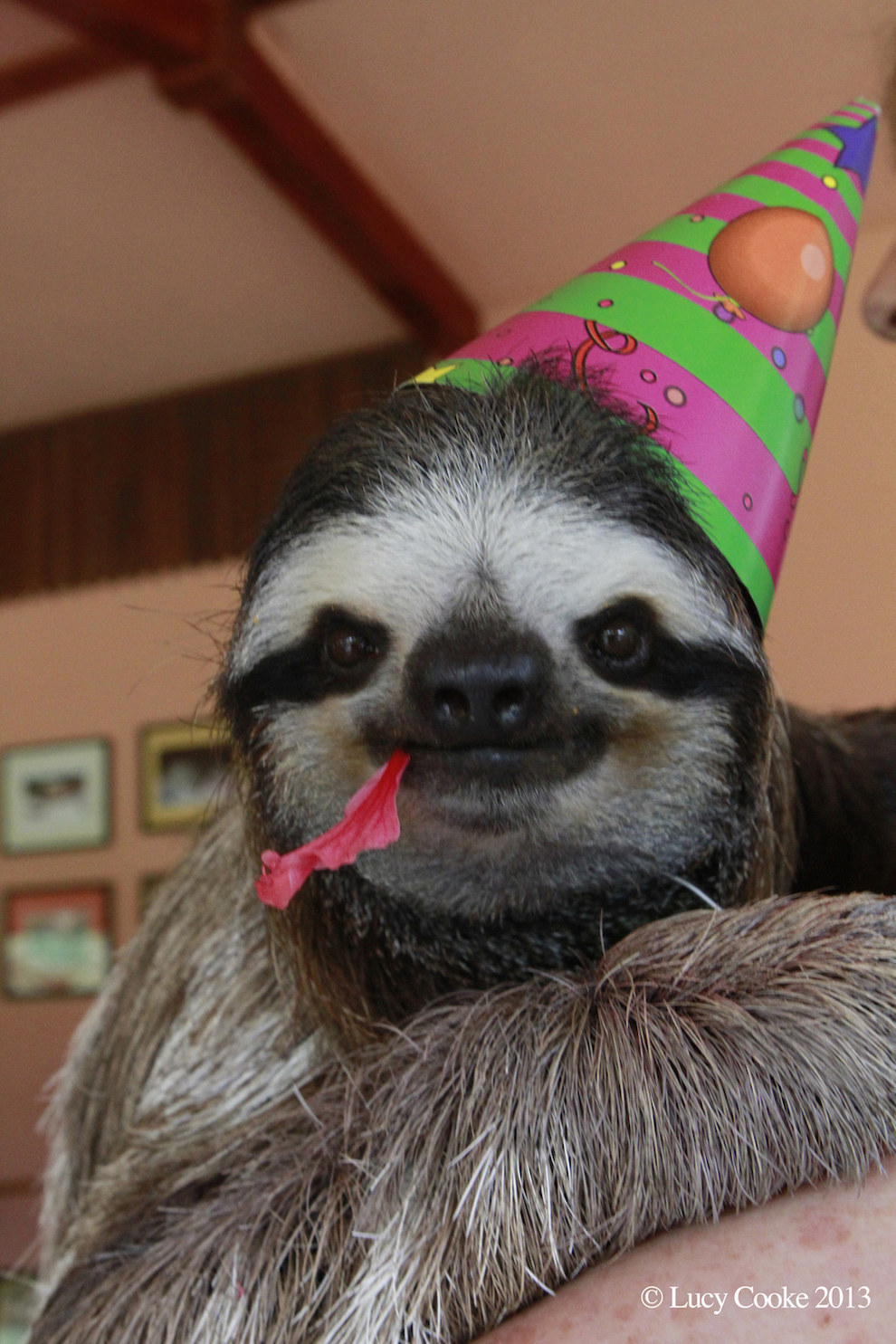Sloth in party hat - photo#2