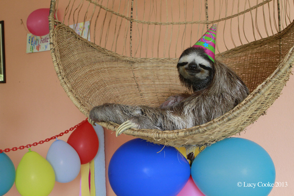 birthday archives  page  of   sloths.au, Birthday card