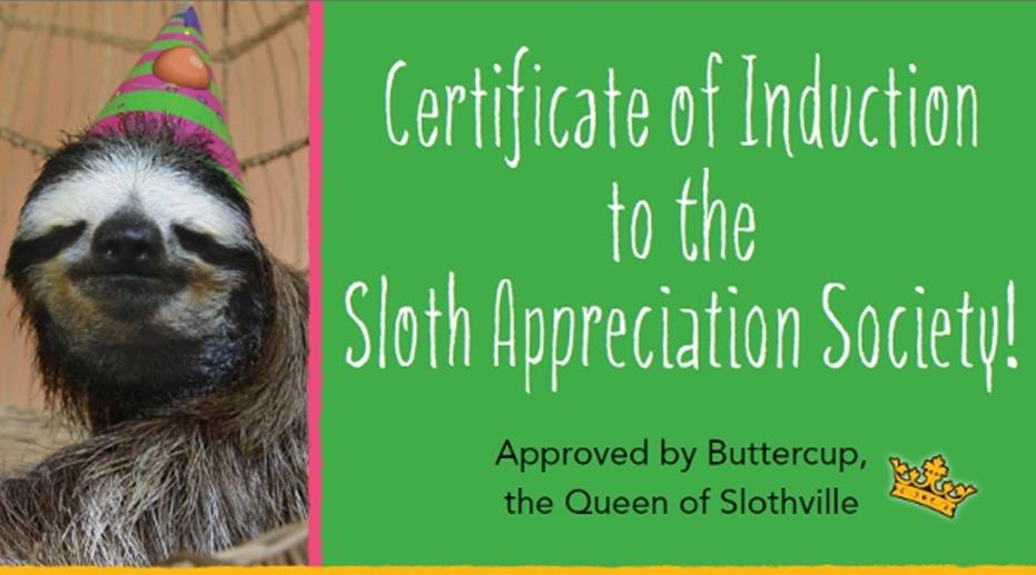Sloth appreciation society