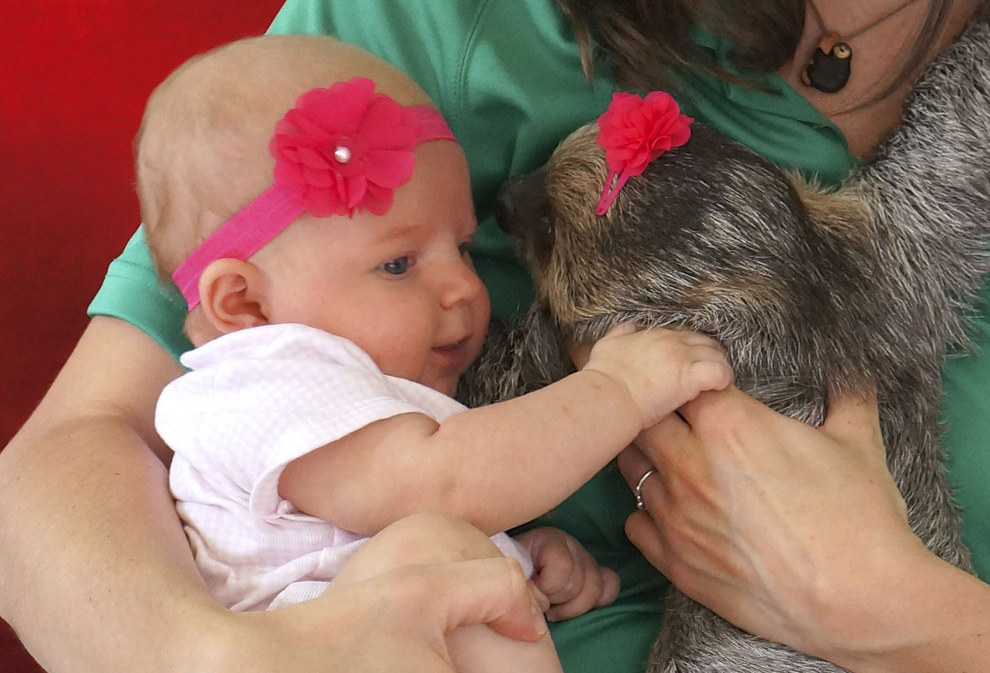 baby and sloth 2