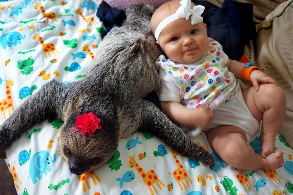 baby and sloth