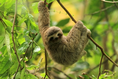 littlesloth2