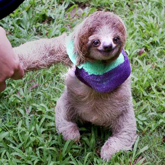 baby sloth sling