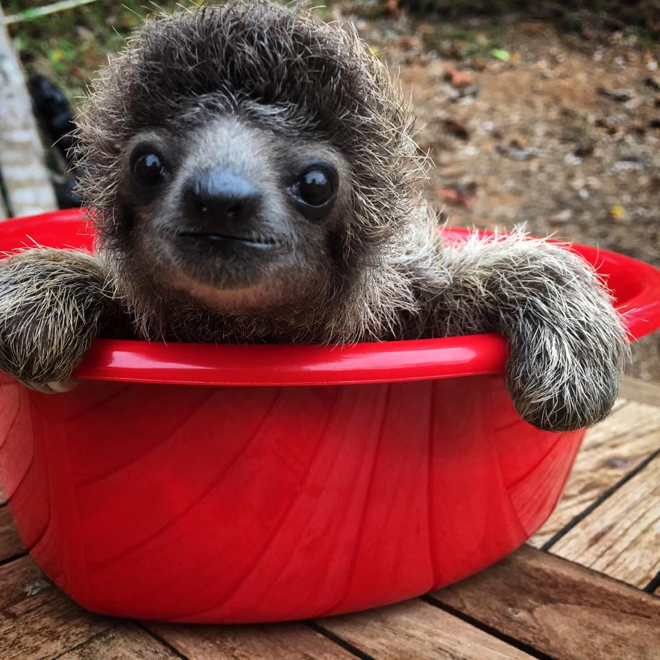 little sloth 3