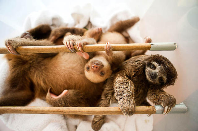 the sloth center - Cahuita - costa rica - carribean coast -