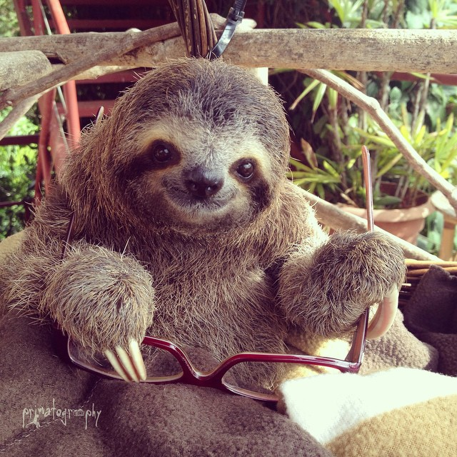 glassessloth